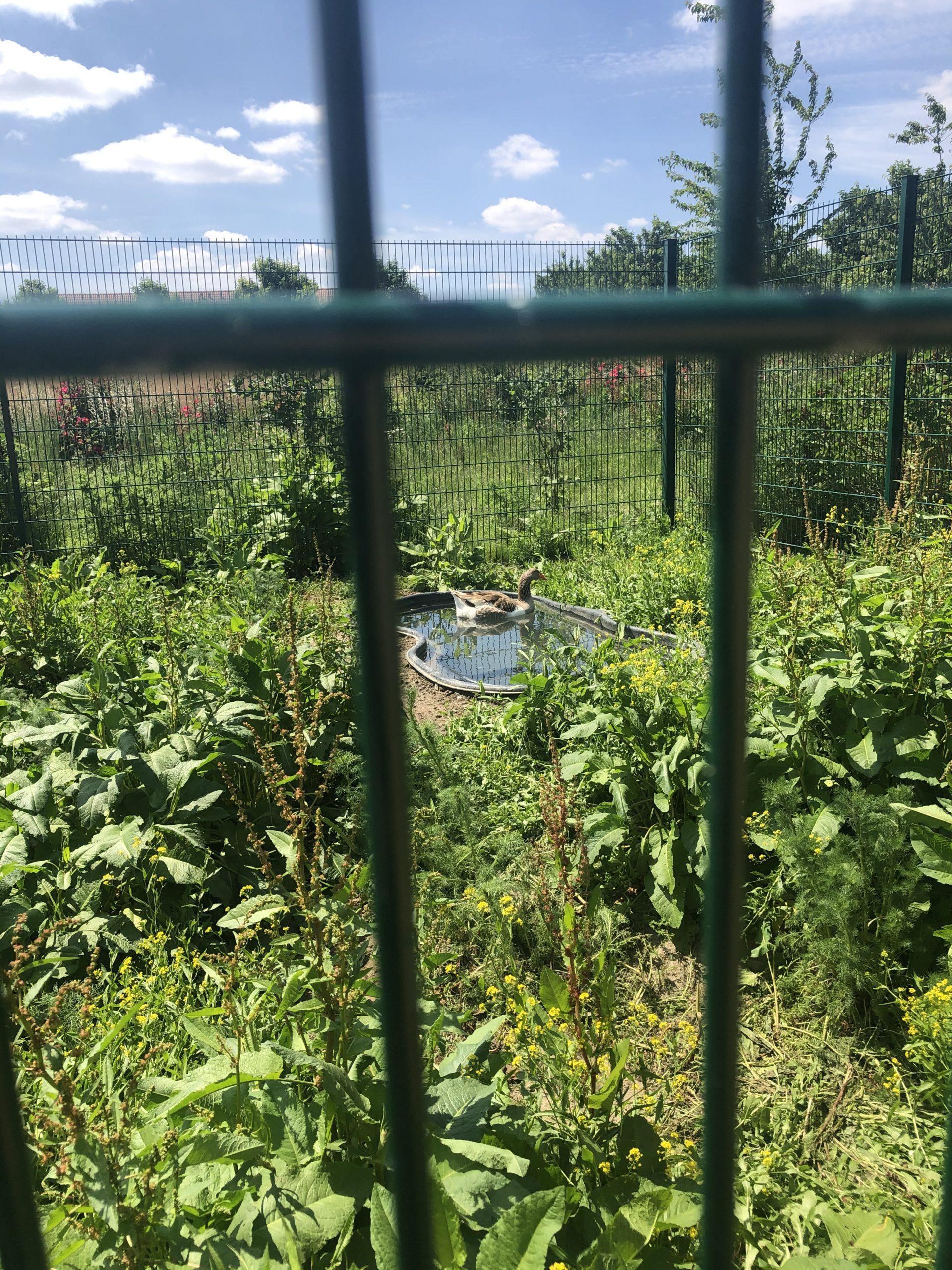 Hier sehen sie das alte Becken für die Tiere es hatte 10000 Liter  und war nicht so Optimal